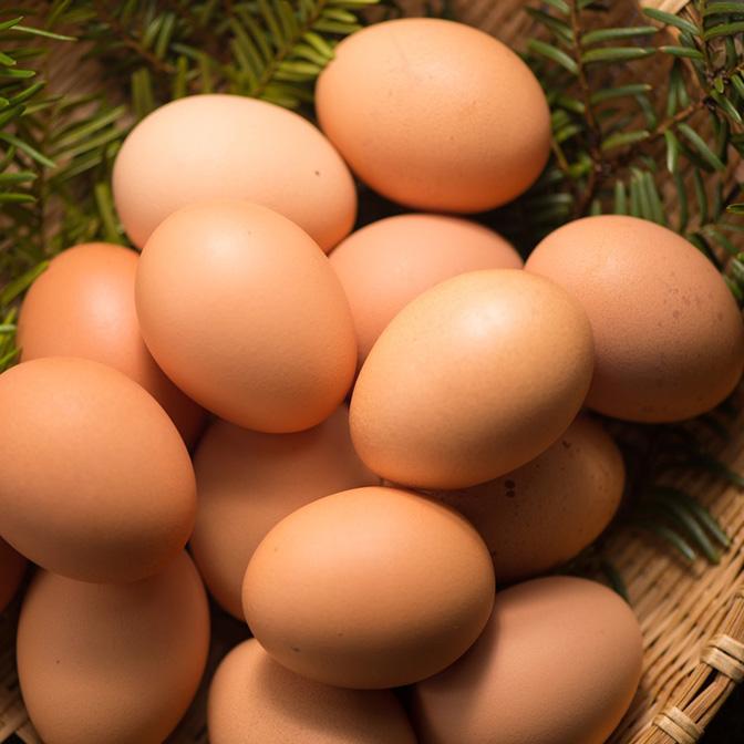 中村農場の卵